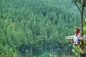rumah pohon di the lodge maribaya bandung