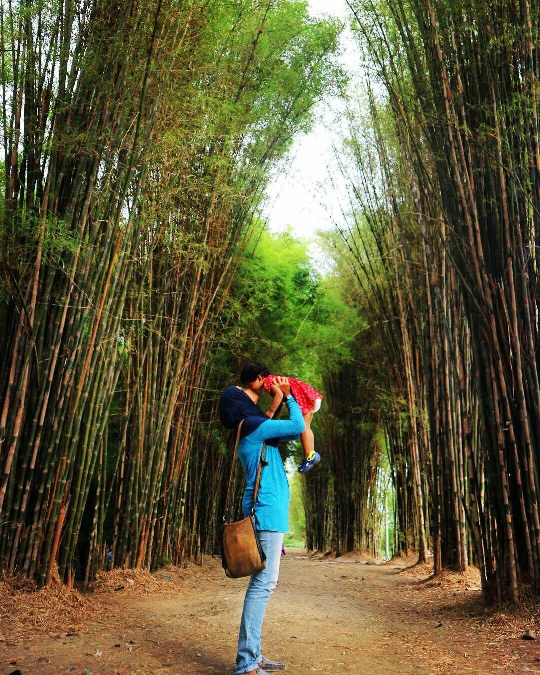 hutan bambu keputih