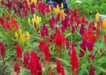kutabawa flower garden