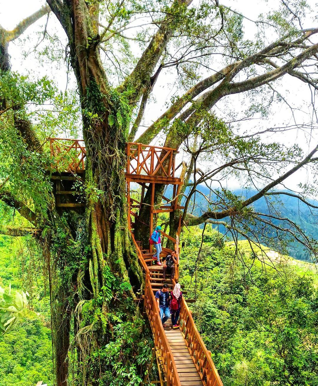 Rumah Pohon Ciherang Bogor