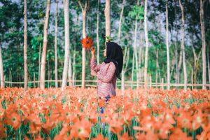 taman bunga amarilis