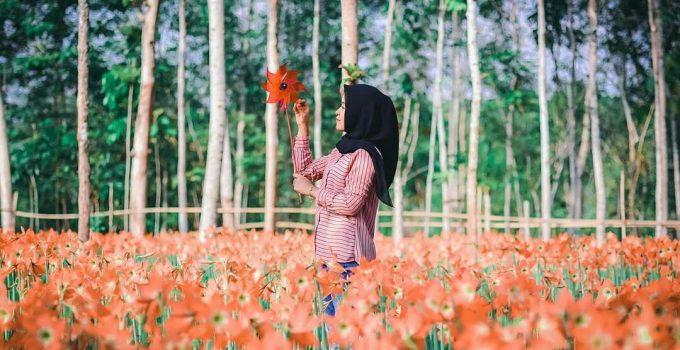 Harga Tiket Rute Dan Lokasi Taman Bunga Amarilis Patuk