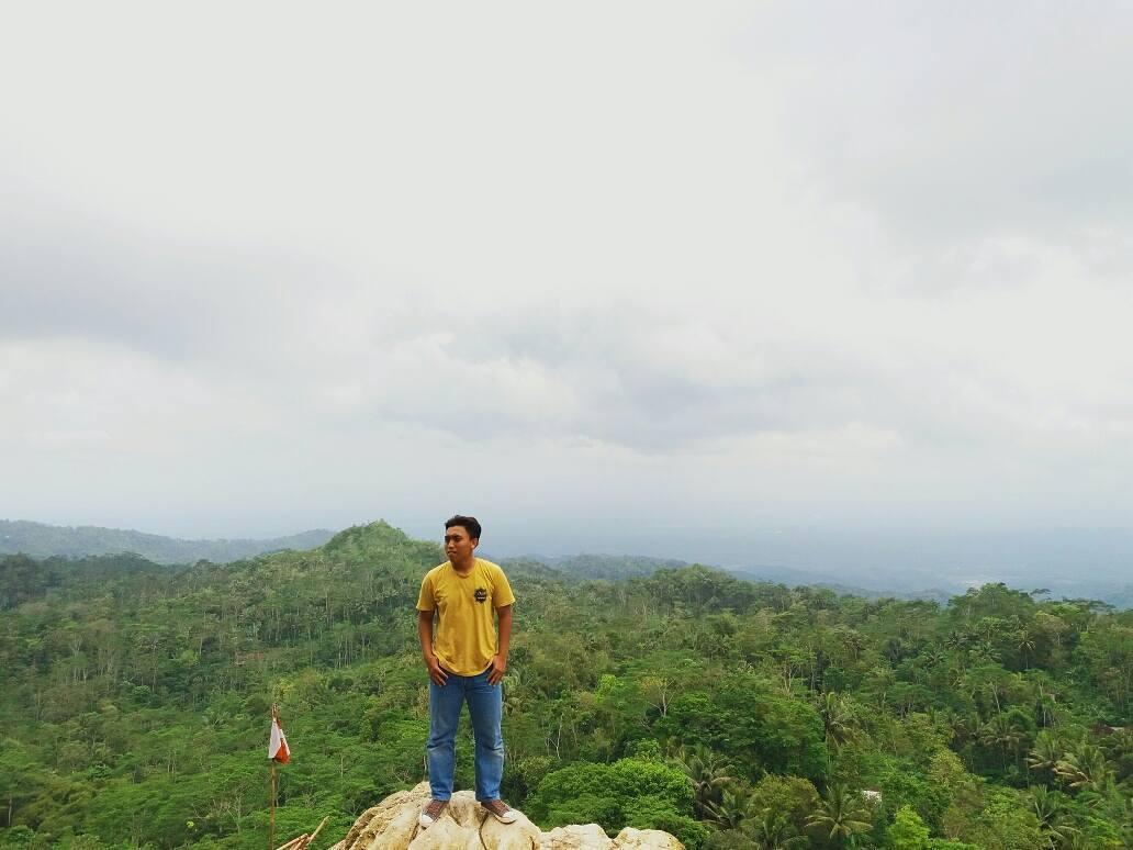 pesona keindahan alam perbukitan yang hijau di hutan pinus kalilo