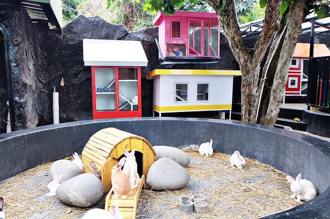 rumah kelinci di rabbit town