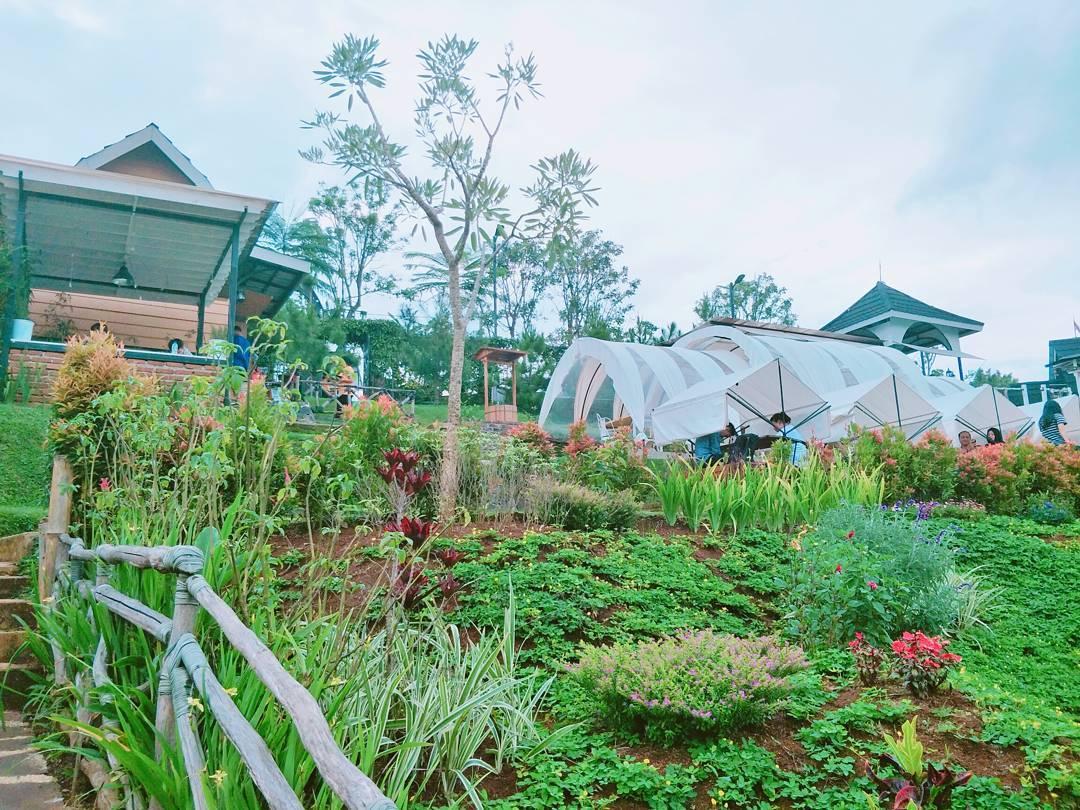 taman hijau di tafso barn