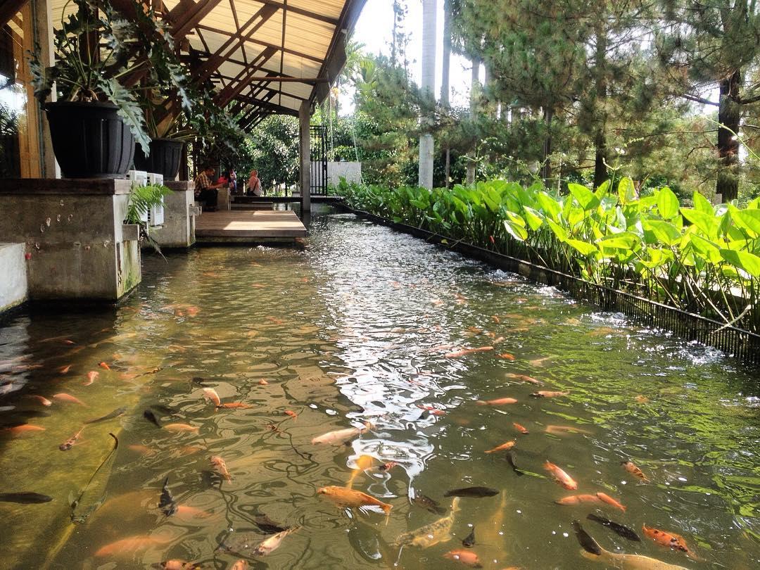area ternak ikan di kuntum farm field