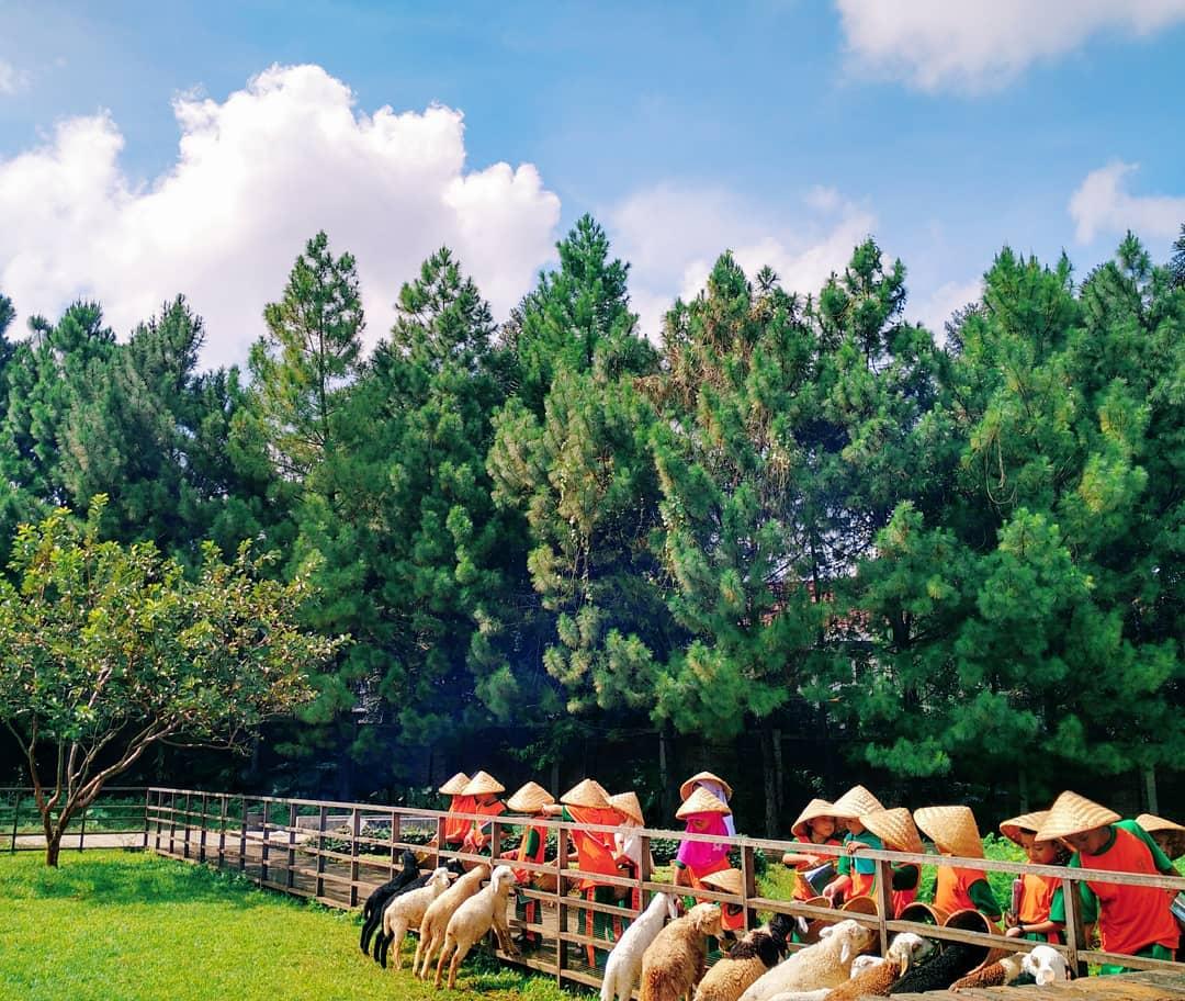 kuntum farm field