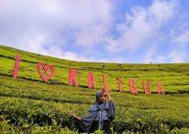 kebun teh kaligua bumiayu