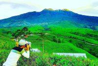 kebun teh kemuning tawangmangu