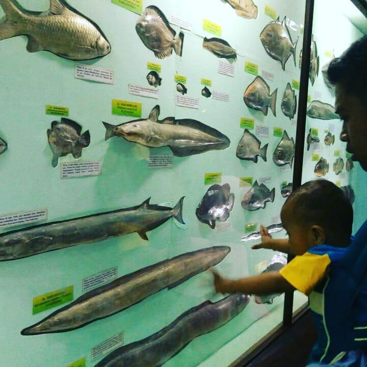 belajar bersama anak di museum zoologi bogor