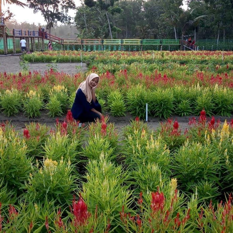 berburu spot foto di taman bunga tali asmoro cilacap