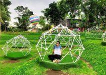 alamanda jogja flower garden