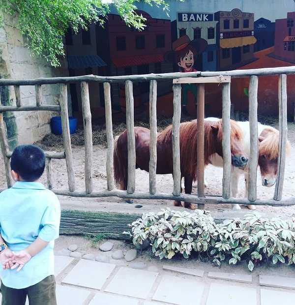 kuda poni di fauna land ancol