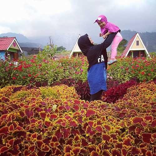 kebun bunga taman kelinci pacet