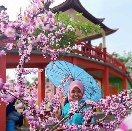 bunga sakura kampung korea kediri