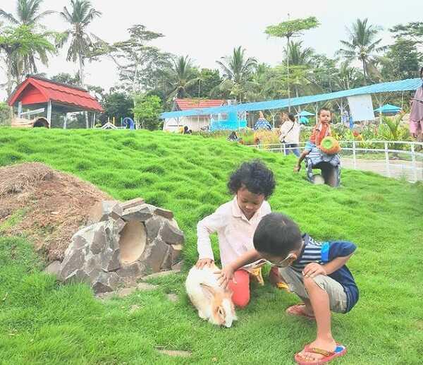 taman kelinci akbar zoo banyuwangi